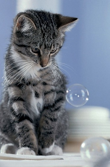 The kitty is confused by a bubble