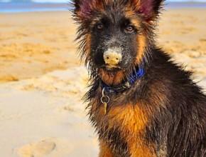 Малко куче мокро на плажа