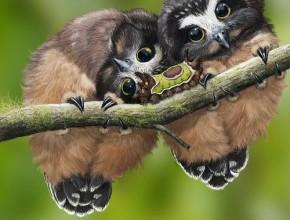 Две бебета бухалчета на клон