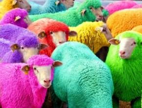 Цветни овце