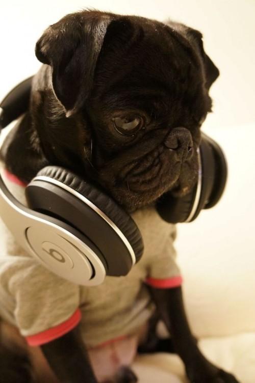 Малко куче със слушалки