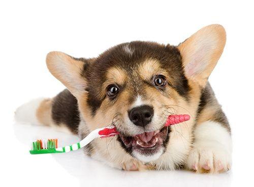 Куче с четка за зъби