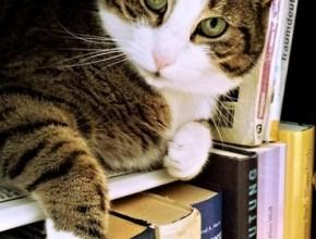 Котка върху книги