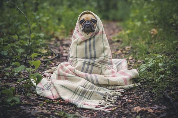 Кученце завито с одеало
