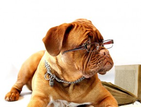Куче с очила