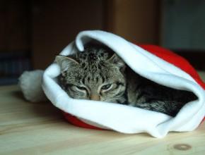Котка легнала в една коледна шапка