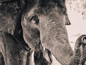 памет като на слон английски език .
